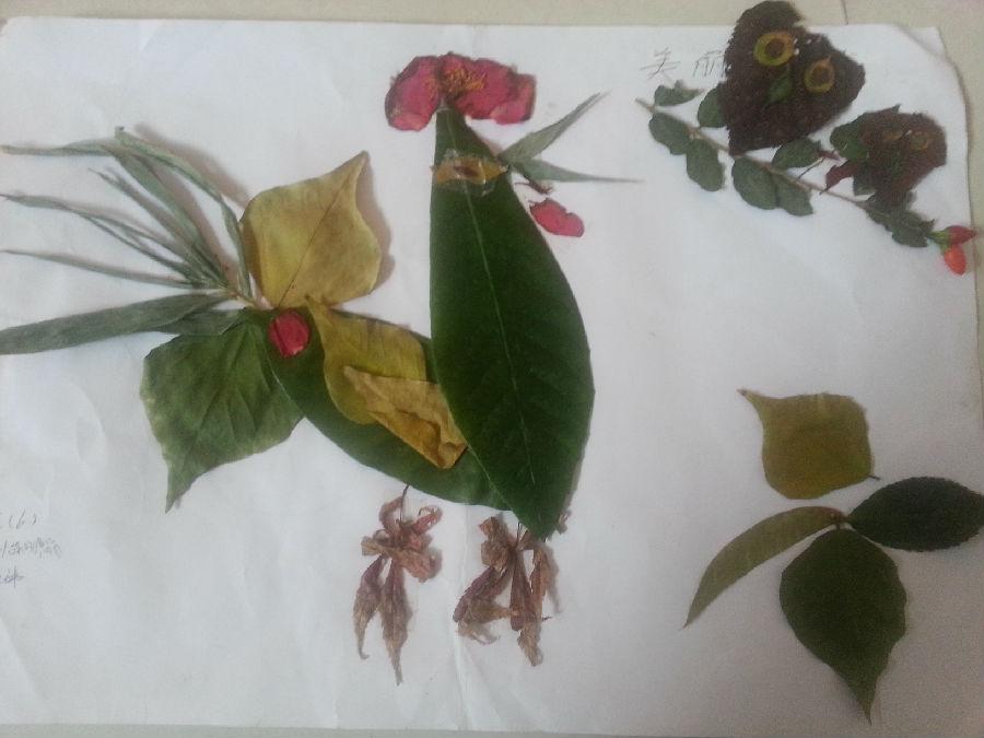 三年级树叶贴画制作获奖作品